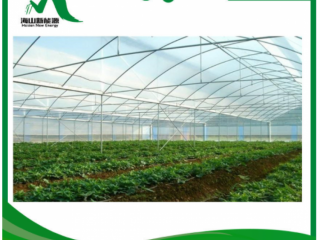 Multi-Span Film Agriculture Greenhouse with Hydropnic Systems
