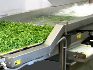 Fresh Cut Processing & Handling Solutions