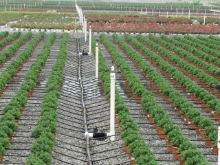 Drip Irrigation & Fertigation System